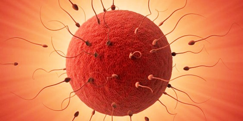 Оплодотворения клетки