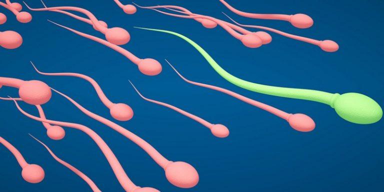 zhivut-li-spermatozoidi-v-banochke