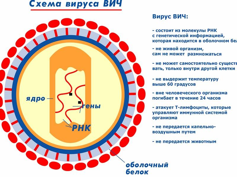 Как заразиться ВИЧ