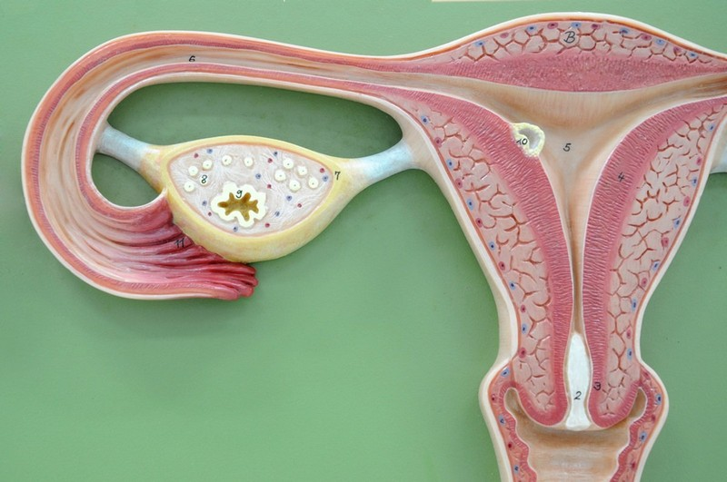 Анализ на цитологию в гинекологии