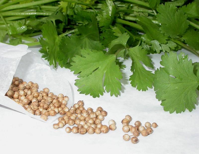 Рецепт семян петрушки от простатита
