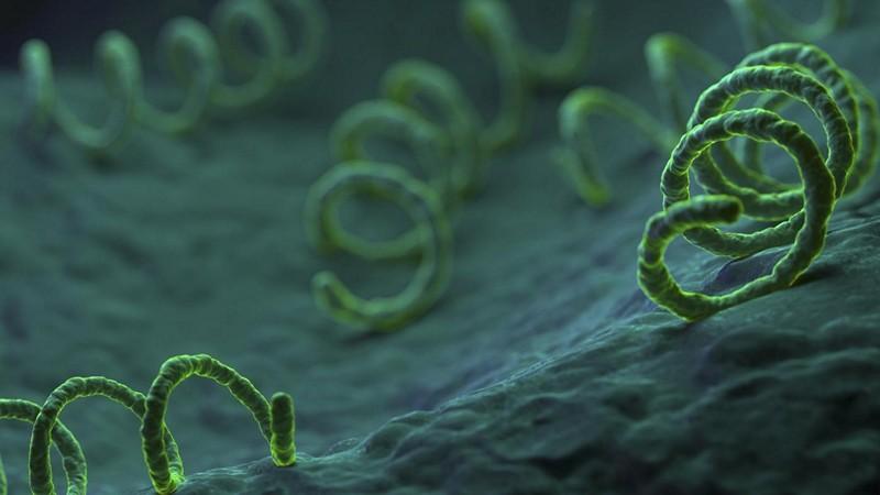 Какие антибиотики назначают для лечения сифилиса
